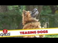 Teasing Dogs With a Drone