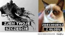 kocham tego kota <3