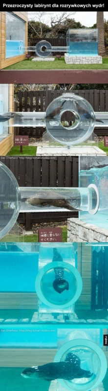 Jak tu nie kochać wydr..:)