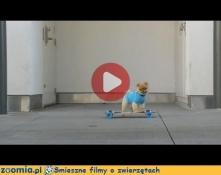 To nie jest zwykły pies Śmieszne Flimy Psy Zoomia.pl