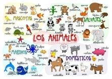 Zwierzęta po hiszpańsku.