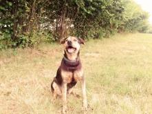 Mój skarb ! <3 Toro :) Adoptowany ze schroniska w sierpniu 2014 :) a Wy macie psiaki ze schroniska ? Jakie macie zdanie na temat  czy lepiej kupić zwierzaka czy go adoptować ?