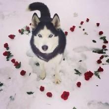 Happy Valentine's Day :)