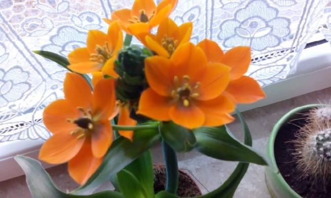 do kupienia w kaufland 12 zł..... :-)  zapachniało wiosną.....