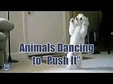 Animals Dancing