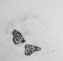 #butterfly #butterflies #draw #draws #drawing #drawings #drawingpainting #art...