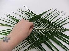plecione liscie palmy