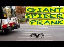 Remote Controlled Spider Attack Prank