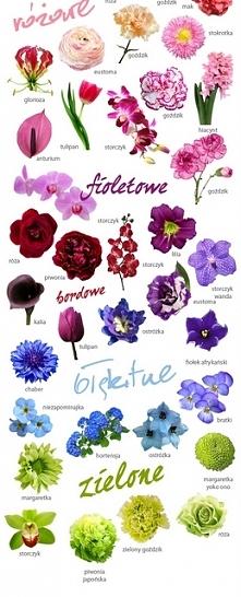 kolorystyka kwiatów na wesele