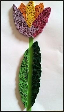 Tulipan :)