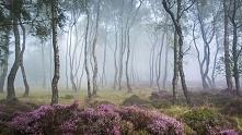 Stantor Moor, Wielka Brytania.
