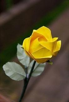 papierowa róża