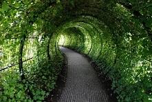 marzy mi się taki tunel w ogrodzie :)