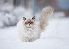 Wrzucić kota do śniegu - niewybaczalny błąd