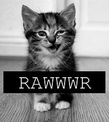 Która pani by chciała takiego kociaka? :D