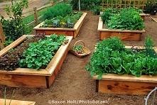 warzywniaczek