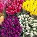 najpiękniejsze kwiaty :)