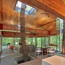 Szalony ale i piękny pomysł ! Drzewo w środku domu !