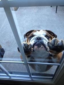 Wpuścisz mnie ???
