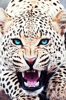 roar !!