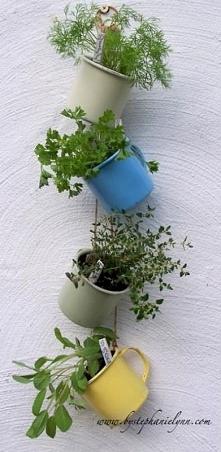 Pomysł na zioła!