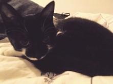 moja kicia w końcu nie patataja jak szalona po całym mieszkaniu :) jak myślicie? w jakim wieku kotkom przechodzi ten największy szał na zabawę?