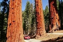 USA- Kalifornia, Park Narodowy Sekwoi