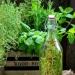 Olej rzepakowy aromatyzowan...