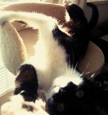 kocie selfi :D