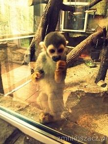 monkey <3