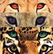 kocham te kocie oczy!