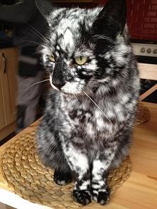 Takiego kotałka to jeszcze ...
