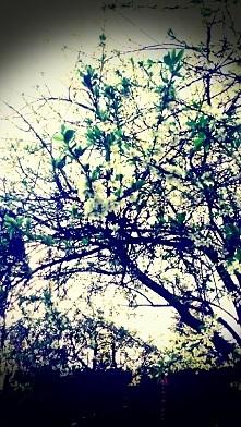 Sama zrobiłam zdjęcie  ♥ ♥ ...
