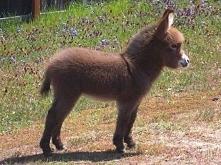 babay donkey! sooo cute! ♥