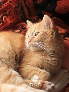 Mój kotek Tytusek :) FB: Guzik Prawda
