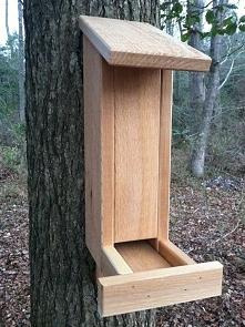 dupka dla ptaków