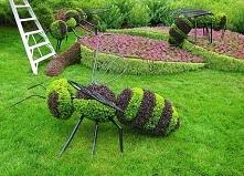Chce ktoś takie pszczoły w ogrodzie ?;)