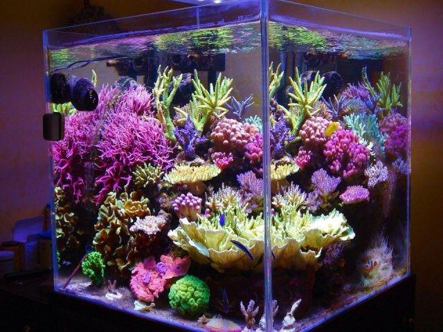 Nano akwarium morskie na housee p for Salzwasser aquarium
