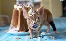 Prosiak i ciasto.