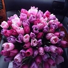 tulipany ♥