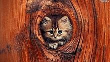 Kotek w drzewie.