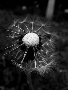 black&white - mojego autorstwa    Zapraszam na mojego bloga:  moniies.blo...