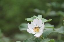 Kwiatek :)