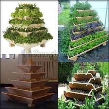 pomysł na ogrodowy zielnik