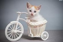 Kociaczek i rowerek.