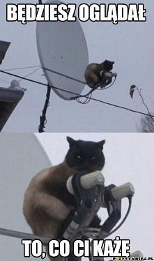 Kot na antenie