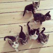 kuciaczkiii *.*