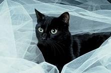 czarny kot <3