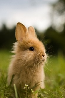 królicek ^^
