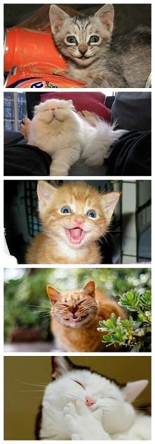 Kociaki cieszą się bo weekend coraz bliżej:D!